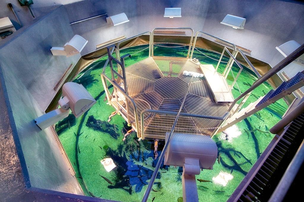 Museum für Naturkunde Dortmund - Blick von oben in kristallklares Wasser